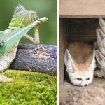 15 photographies d'animaux qui ont capturé leurs gestes au moment parfait
