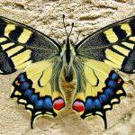 Découvrez ce que votre papillon mois de naissance révèle à propos de vous