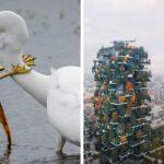 Top 30 des plus belles photos du concours de photographie Instagram de National Geographic