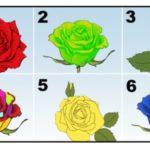 Choisissez la plus belle rose et découvrez les secrets de votre personnalité