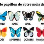 Saviez vous que le papillon de votre mois de naissance révèle votre personnalité