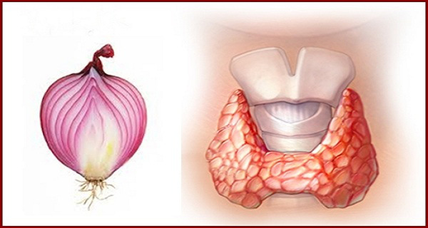 thyroid-onion-massage