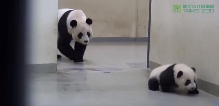 Panda-Bed-Edited-750x364