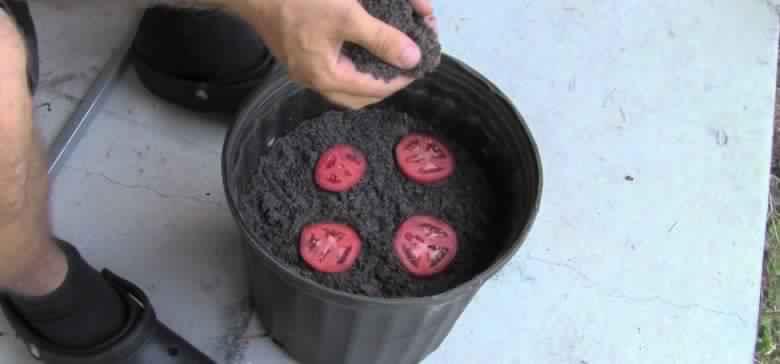 Tomato-Seedlings-780x364