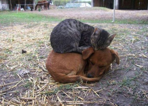 cats_sleeping_on_dogs_1