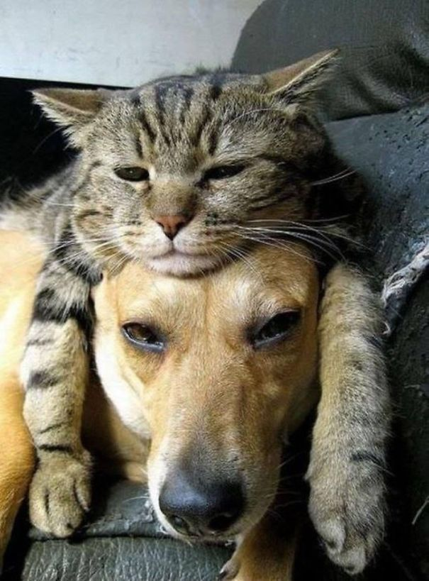 cats_sleeping_on_dogs_2