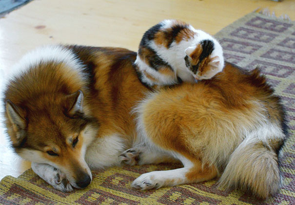 cats_sleeping_on_dogs_9