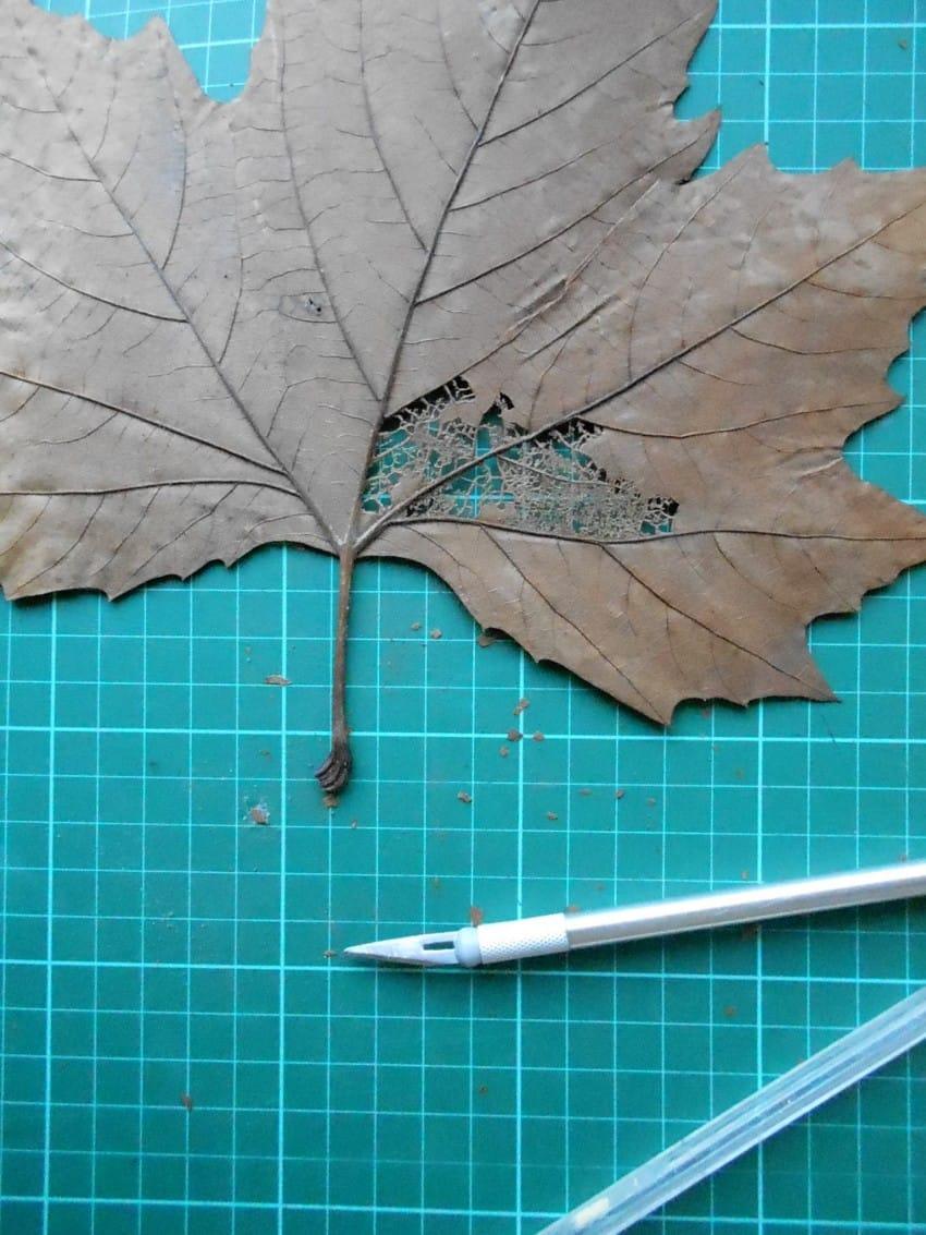 leaf-7-850x1133