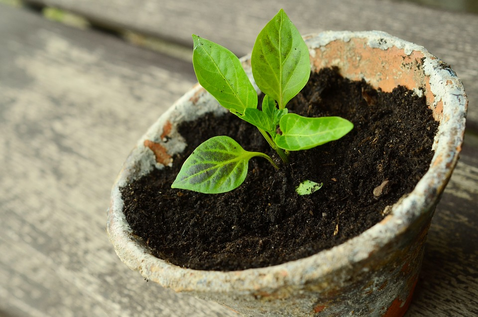 plant-786689_960_720