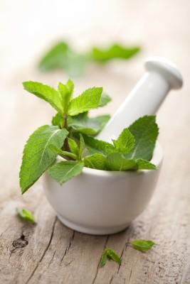 peppermint_medicinal_properties