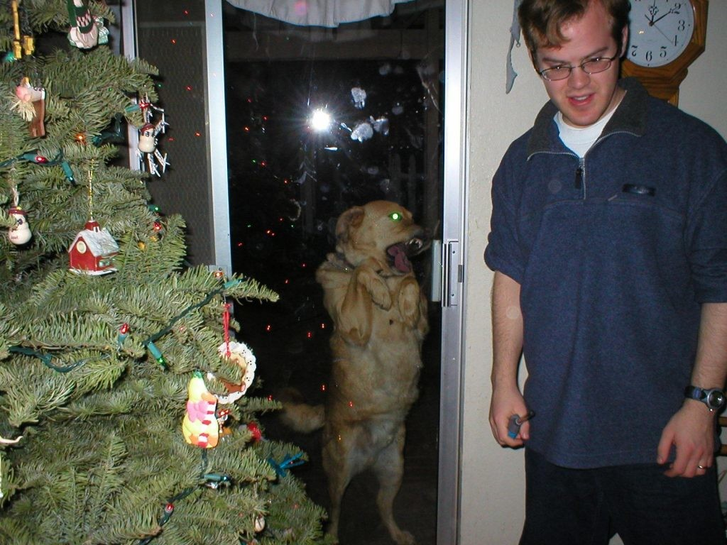 the-ghost-of-christmas-past-dog-photobomb-1024x768-1024x768