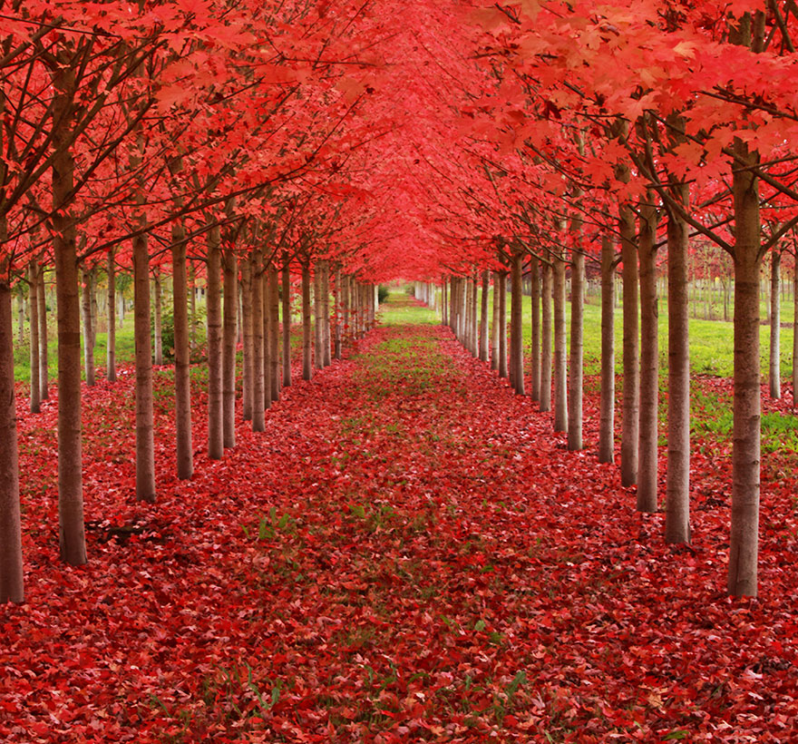 worlds_most_beautiful_trees_13