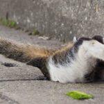 Ce photographe capture des clichés magiques des chats errants