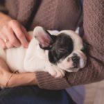 90 euros de l'heure pour chouchouter les chiens: c'est l'offre la plus douce qui soit