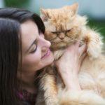 La personnalité de votre chat est susceptible de correspondre à la vôtre, selon cette nouvelle étude