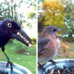 Cette femme a installé un photomaton pour les oiseaux dans son jardin et les résultats sont extraordinaires