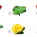 Choisissez la plus belle rose et découvrez les plus beaux secrets de votre personnalité…