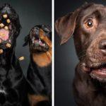 Des expressions hilarantes de chiens qui tentent d'attraper des friandises dans les airs