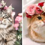 Cet artiste fait des couronnes de fleurs pour les animaux et elles sont magnifiques