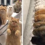 30 personnes vivant avec plus de 3 animaux de compagnie révèlent à quoi ça ressemble, et c'est hilarant